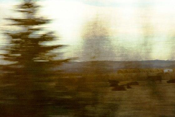 Motion-Blur-StudyCows