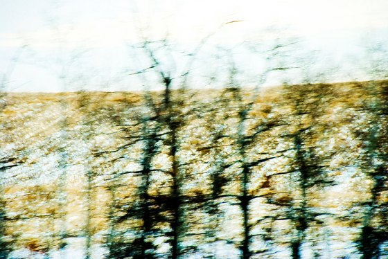 Motion-Blur-StudyTreesLayer
