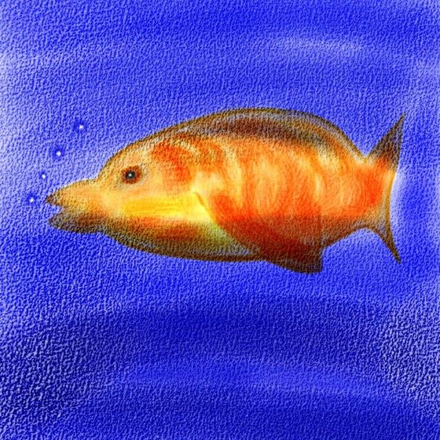 Watercolor-Fish-JPG